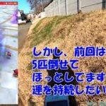 ジョギング&ドラクエウォーク_<週末運試し(メタルダンジョン)編5>(Takemushiワールド)