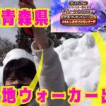【ドラクエウォーク】雪国青森県ウォーカーデビュー戦!セイレーンガチャファイト!レディーゴー!